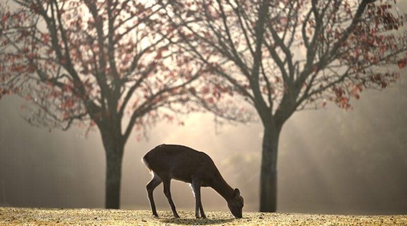 Wekker met natuurgeluiden